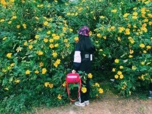 Hoa Dã quỳ hay còn gọi là hoa cúc quỳ, sơn quỳ, quỳ dại, hướng dương dại
