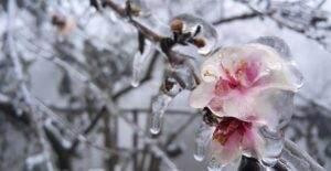 Tuyết đọng trên những ngọn cây